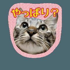 chiko家の毛深い仲間たち〜つぶやきVer〜