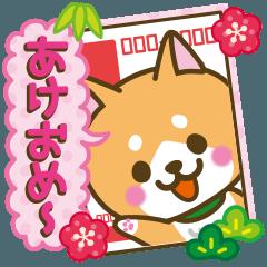【戌年】柴犬のお正月&日常2018