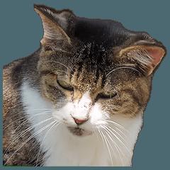 ステキな野良猫(写真版)