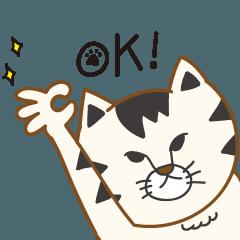トラ猫のグウェングウェンさん