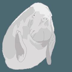 珍しい動物たち ジュゴン