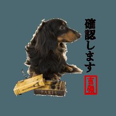 IRIS犬