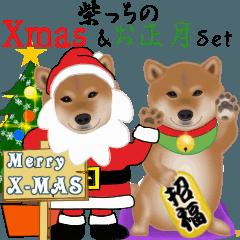 [LINEスタンプ] 柴っちのXmas & お正月セット