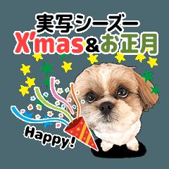 シーズー犬ぽんずとかぼす【Xmas&お正月】