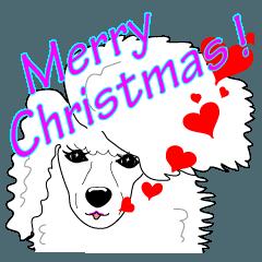犬と クリスマス 2:トイプードル