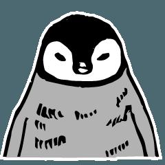 コウテイペンギンの赤ちゃん