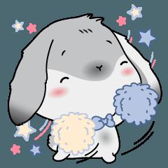 Piti the cutest rabbit bunny.
