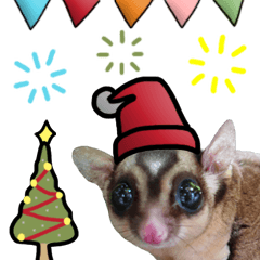 Sugar Glider Happy New Year