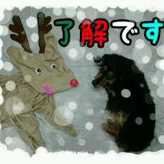 【X'mas & お正月】おとぼけダックス