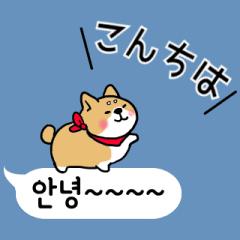 動く▷まめまめ柴の韓国語ふきだし
