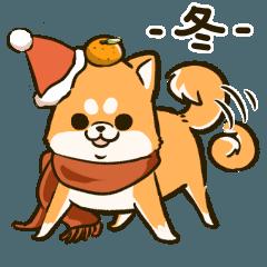豆柴のまめ吉(冬)