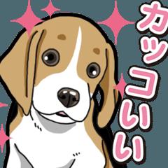 わんこ日和 ビーグル こいぬ vol.3