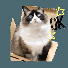 大好きな猫 ラグドールのスタンプです2