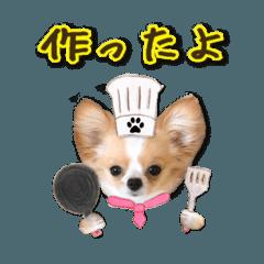♡チワワのラテ食べ物2大人のお誘い♡