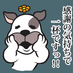 犬のカマセさん《セレクト編》