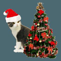 ミミ <メリークリスマス>