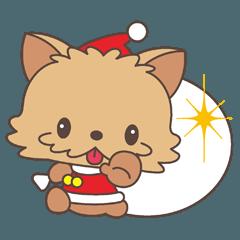 100%ヨーキー・クリスマス編