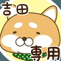 吉田さんが使う☆柴犬