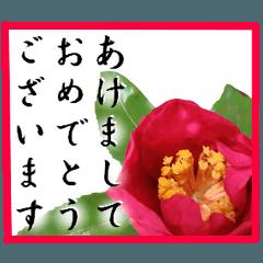 新年の挨拶に花を♪